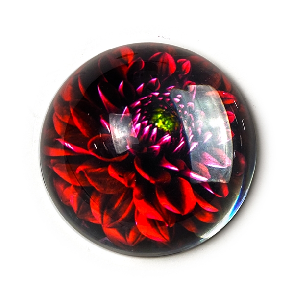 Red Dahlia Glass Paperweight-Round